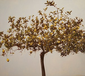 Lemon by William Delafield Cook  contemporary artwork