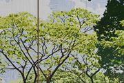 D.120 Botanical Gardens Singapore by Gary Carsley contemporary artwork 5