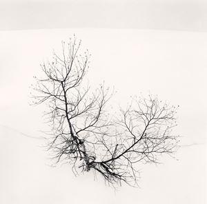Ayakos Tree by Michael Kenna contemporary artwork