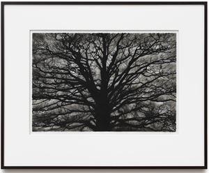 Study of Brain Tree by Robert Longo contemporary artwork