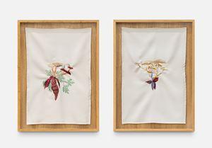 A quimera das plantas [Os cogumelos e a o coração da bananeira] by Brígida Baltar contemporary artwork