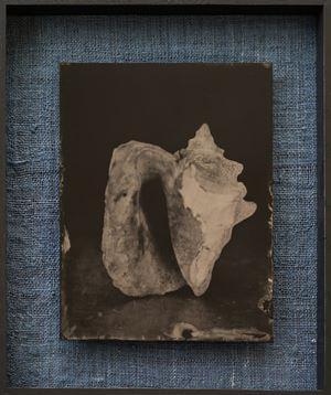 Muschel by Steffen Diemer contemporary artwork