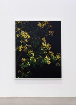 Mimosa (Actor) (II) by Sarah Jones contemporary artwork photography