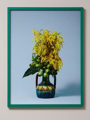 The Banshee, Golden Wattle (Acacia pycnantha) by Ann Shelton contemporary artwork