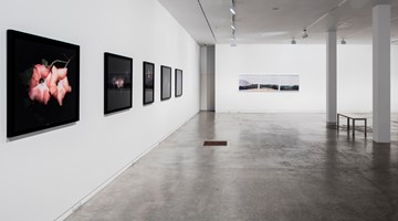 Contemporary art exhibition, Greta Anderson | Joyce Campbell | Conor Clarke, The Close at Two Rooms, Auckland