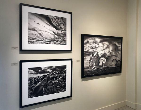 Exhibition view:Sebastião Salgado,Subtle Images of the Natural World, Sundaram Tagore Gallery, Madison Avenue (22 January–26 February 2021). Courtesy Sundaram Tagore Gallery.