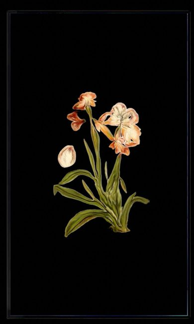 Infinite Herbarium Morphosis #6 by Caroline Rothwell contemporary artwork