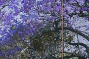 D.116 Purple Reign by Gary Carsley contemporary artwork 4
