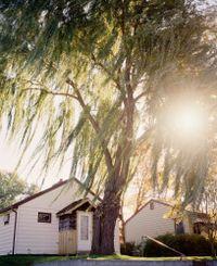 Omaha, NE, (Sun Through Willows) by Gregory Halpern contemporary artwork photography