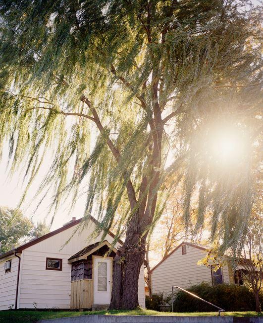Omaha, NE, (Sun Through Willows) by Gregory Halpern contemporary artwork