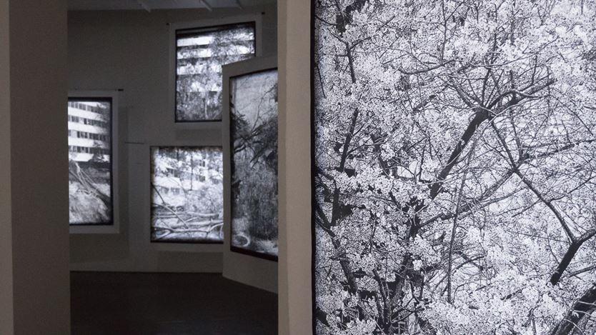 Exhibitioin view: Kim Donki,Trees_seoul, Gallery Chosun, Seoul (3 December–16 December 2020). Courtesy Gallery Chosun.