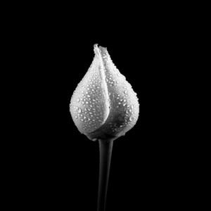 Bouton de Rose by Jean-Baptiste Huynh contemporary artwork