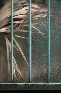 Arecaceae livistonia II by Samuel Zeller contemporary artwork photography