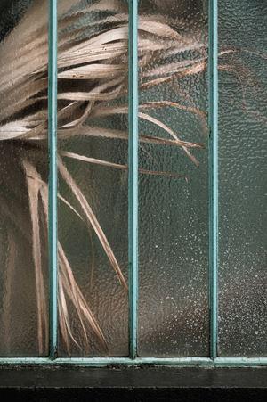 Arecaceae livistonia II by Samuel Zeller contemporary artwork
