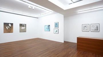 Contemporary art exhibition, Kunié Sugiura, Little Families; Fixity of Nature, 1992-2001 at Taka Ishii Gallery, Tokyo