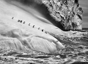 Chinstrap penguins on an iceberg, between Zavodovski and Visokoi islands, South Sandwich Islands by Sebastião Salgado contemporary artwork