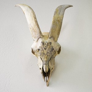 Big Brother (Goat skull) by Glen Hayward contemporary artwork