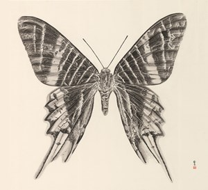 Butterfly 1 by Zhang Yirong contemporary artwork