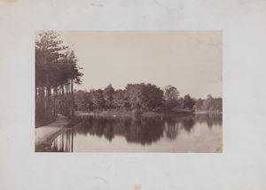 Bois de Boulogne, Paris by Charles Marville contemporary artwork