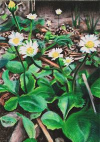 Wildflowers – Daisies! by Anita Fricek contemporary artwork painting, works on paper