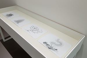 Plant Series by Cemelesai Takivalet contemporary artwork painting, works on paper, drawing