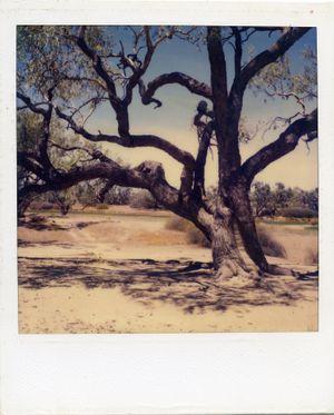 Australia (8) by Sidney Nolan contemporary artwork