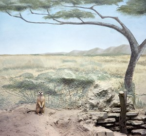 Meerkat and scenery by Eric Pillot contemporary artwork