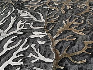 Dryland Farming #2 by Edward Burtynsky contemporary artwork