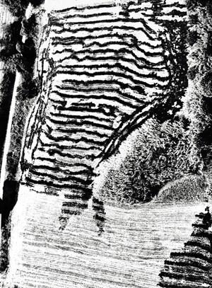 From the series 'Presa di conscienza sulla natura' by Mario Giacomelli contemporary artwork