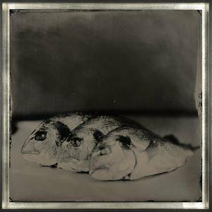 Gilthead by Steffen Diemer contemporary artwork