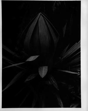 Untitled by Takuma Nakahira contemporary artwork