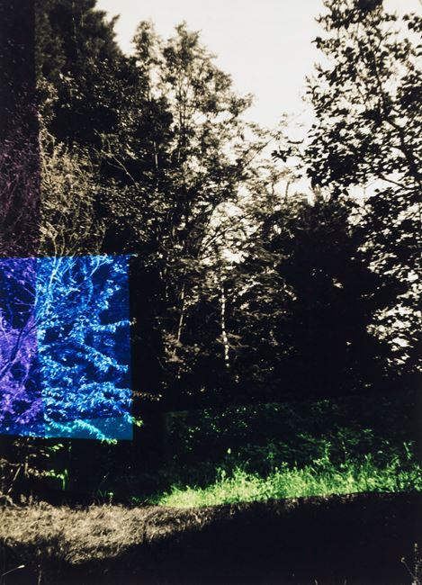 Garten mit Blau und Lila by Frank Mädler contemporary artwork