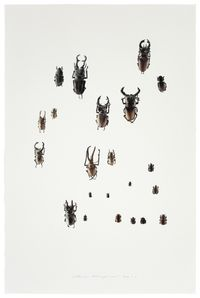 Insect No. 3 虫3 by Guo Hongwei contemporary artwork print