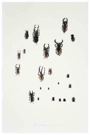 Insect No. 3 虫3 by Guo Hongwei contemporary artwork