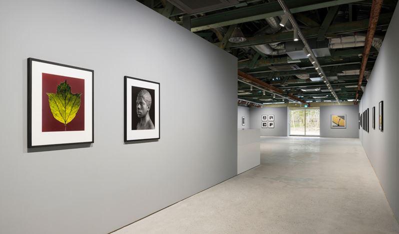 Exhibition view: Robert Mapplethorpe,Robert Mapplethorpe: More Life, Kukje Gallery Busan (18 February–28 March 2021). Courtesy Kukje Gallery.