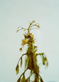 Leaves swim (SHI/F 009) by Shimabuku contemporary artwork photography, print