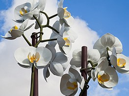 Isa Genzken's 'Two Orchids' bloom at the entrance of New York's Central Park