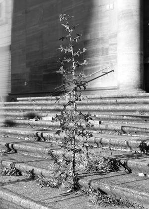 Eiche by Eric Meier contemporary artwork