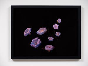 Moon flowers, Lake Balaton by Greta Anderson contemporary artwork