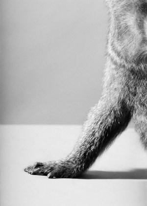 Chimp, Detail Hand by Heji Shin contemporary artwork