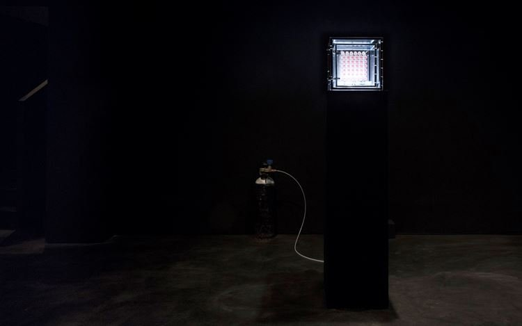Exhibition view: Sean Raspet, New Molecules & Stem Cell Retinoid Screen, Empty Gallery, Hong Kong (22 June–September 7 2019). Courtesy Empty Gallery. Photo: Michael Yu.