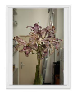 Lilies by Wolfgang Tillmans contemporary artwork