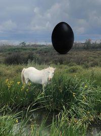 The Camargue Horse by Rachel Rose contemporary artwork print