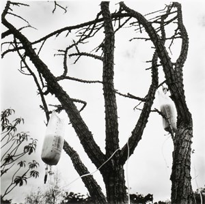 Jardín Botánico de Oaxaca by Graciela Iturbide contemporary artwork