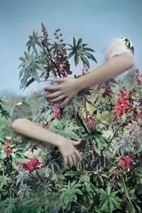 Camouflage by Vanja Bučan contemporary artwork photography, print