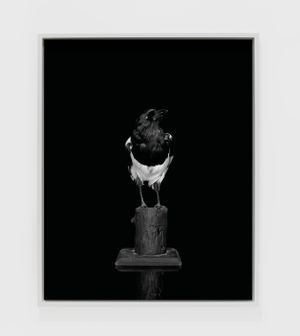 Magpie (Camera) (II) by Sarah Jones contemporary artwork photography