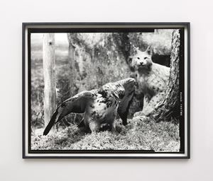 First beast by Gerard Byrne contemporary artwork