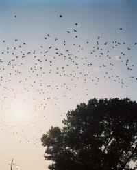 Starlings, Omaha, NE by Gregory Halpern contemporary artwork photography
