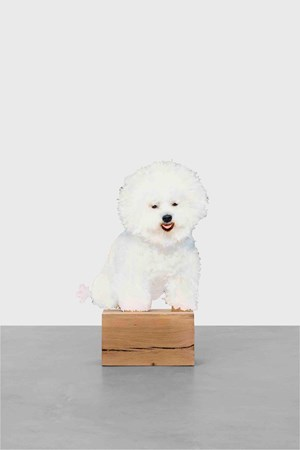 Happy bichon by Tursic & Mille contemporary artwork