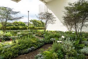 Heterotopia Garden by Shu Yuan Wu & Slow Geng contemporary artwork